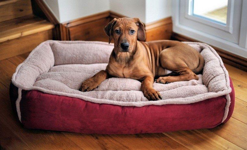 lit chien xxl